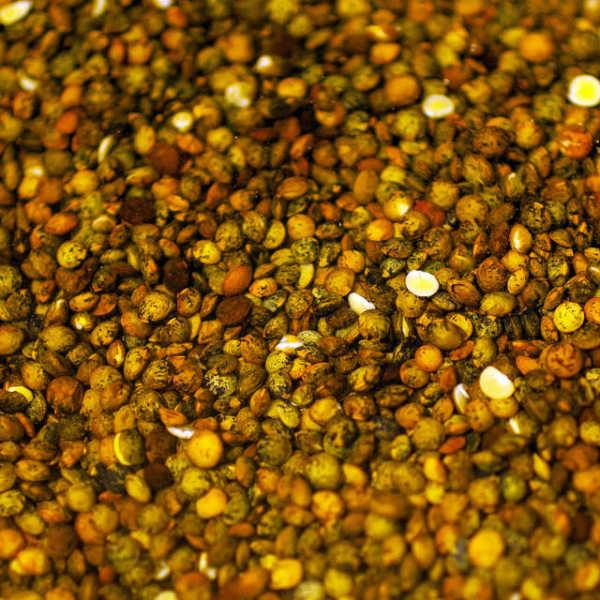 Les lentilles sont des aliments riches en fer